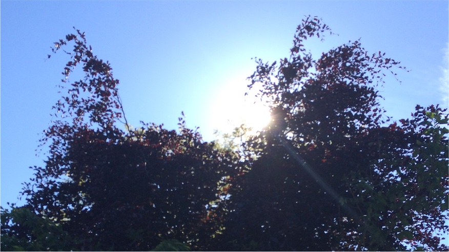 Summer morning in Dublin